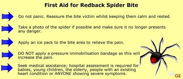 Redback Spider First Aid Advise