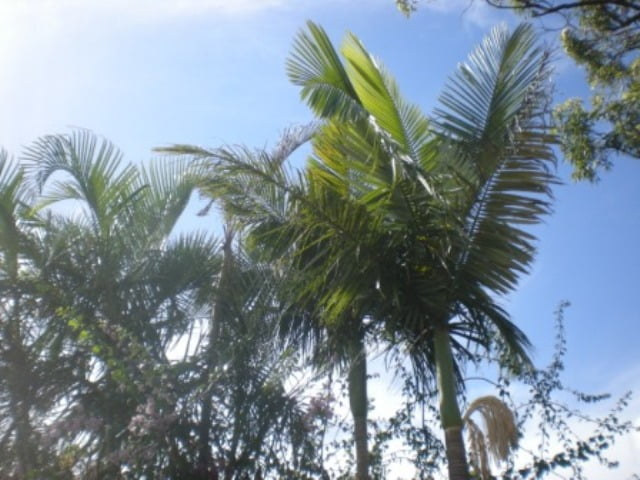 fronds in trees