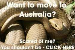 A Guide to Living with Snakes in Australia