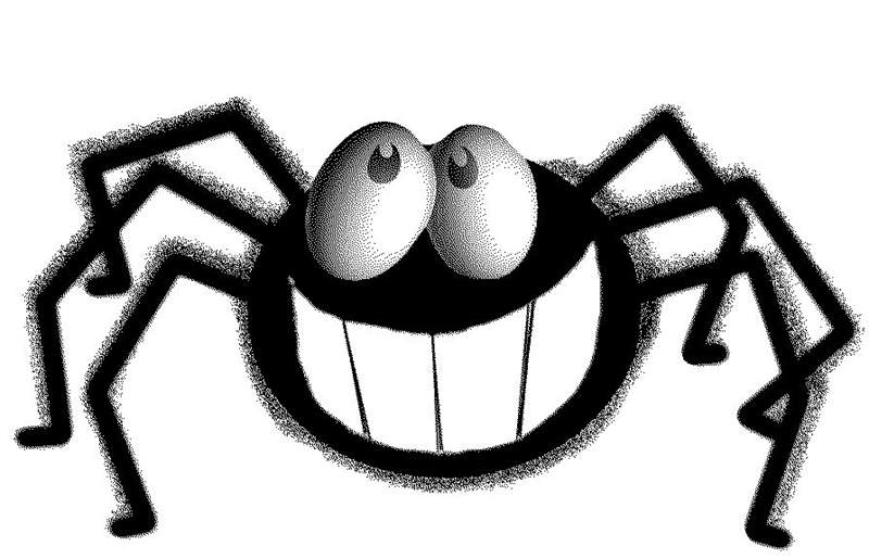 Image result for spiders